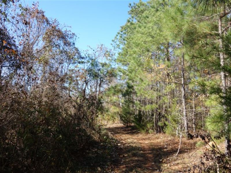 130 Acres - Union County, Sc : Union : Union County : South Carolina