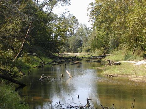 29 +/- Acres River Front Property : Magee : Simpson County : Mississippi