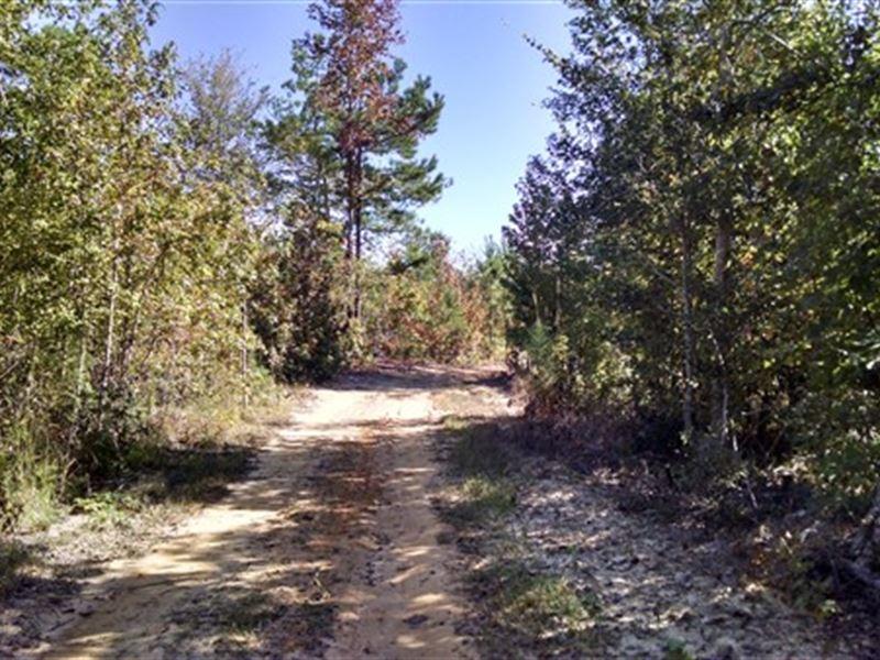 50 Acres - Fairfield County, Sc : Ridgeway : Fairfield County : South Carolina