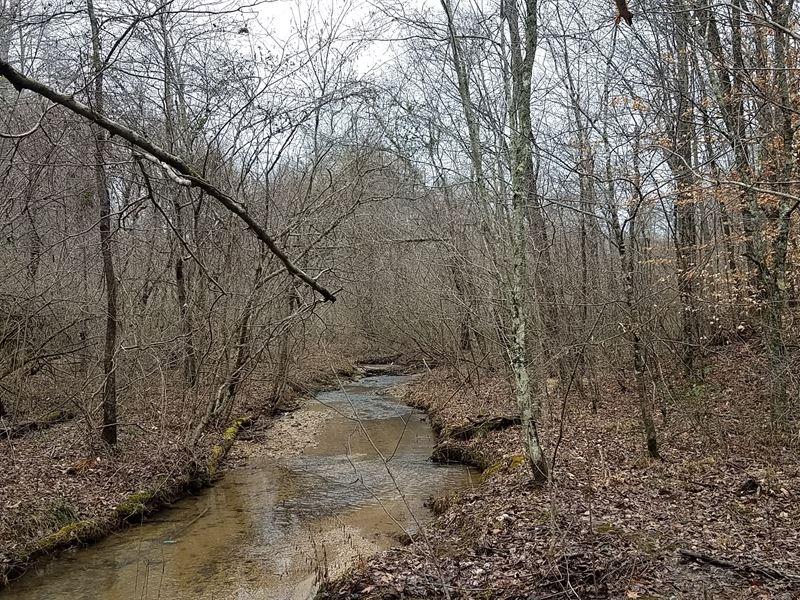 Bobo Creek Tract : Heflin : Cleburne County : Alabama