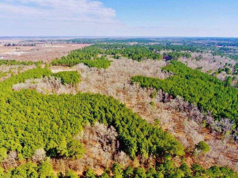 40 Acre Timber/Recreational Acreage : Frierson : De Soto Parish : Louisiana