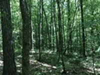 Wooded Hunting Tract : Cullman : Cullman County : Alabama