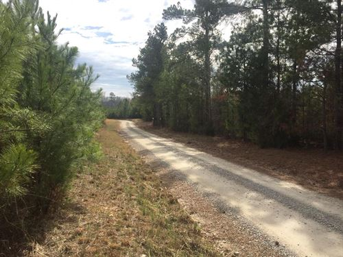 Private Acreage Near Downtown : Chapin : Lexington County : South Carolina