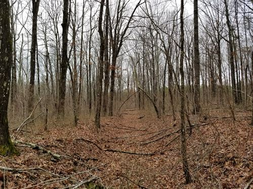 44.83+/- Acres Gorgeous Bluff View : Beersheba Springs : Marion County : Tennessee
