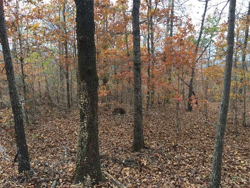 Hunting Land With Good Building Si : Ozark Acres : Sharp County : Arkansas