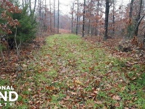 5 Acre Ozark Mountain Lot : Boxley : Newton County : Arkansas