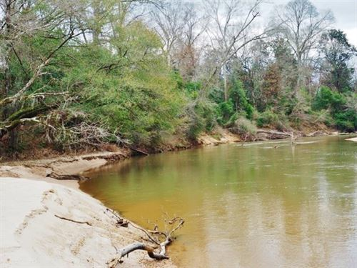 467 Mature Timber Riverfront Land : Summit : Pike County : Mississippi