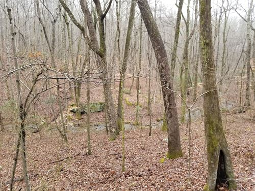 19.88+/-Acres Hunting Property : Sewanne : Marion County : Tennessee
