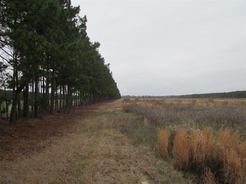 Pittman Road Tract : Lone Star : Calhoun County : South Carolina