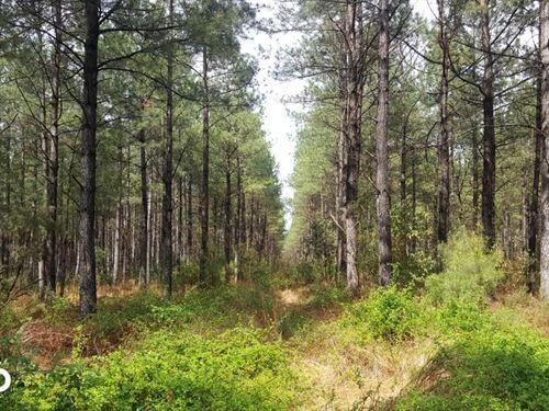 55 Acres Burgaw : Burgaw : Pender County : North Carolina