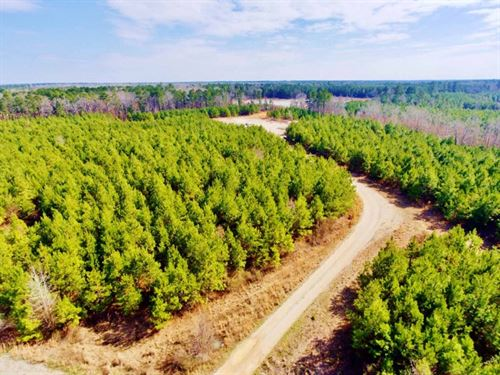 40 Acre Timber/Recreational Acreage : Frierson : De Soto Parish : Louisiana