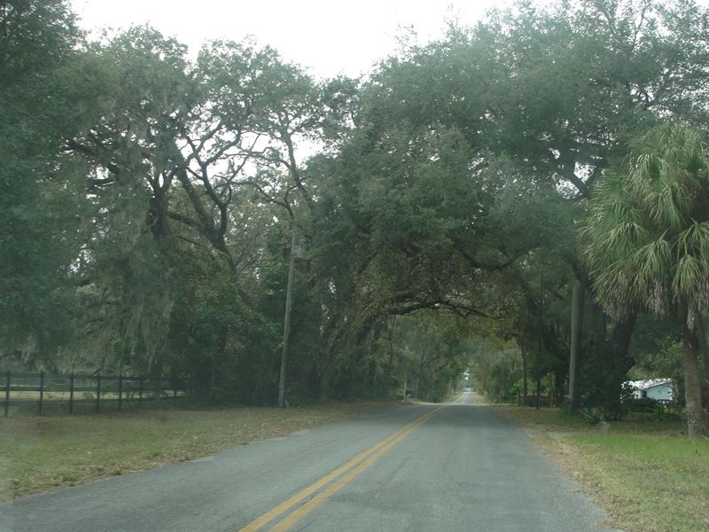 Wooded Acreage By Boat Launch Park : Pierson : Volusia County : Florida