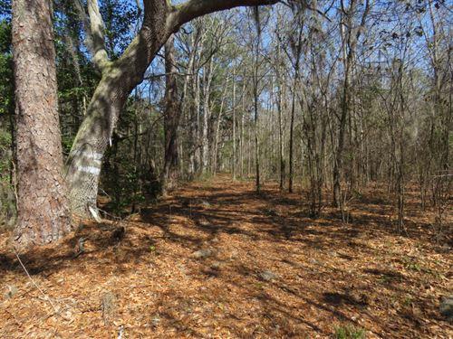 Pynes Tract : Walterboro : Colleton County : South Carolina
