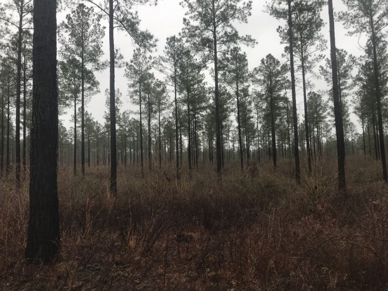 Timberland, Hunting, & Creek Fr : Preston : Webster County : Georgia