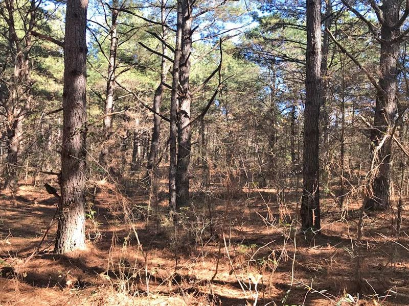 The Bear Creek Tract : Brundidge : Pike County : Alabama