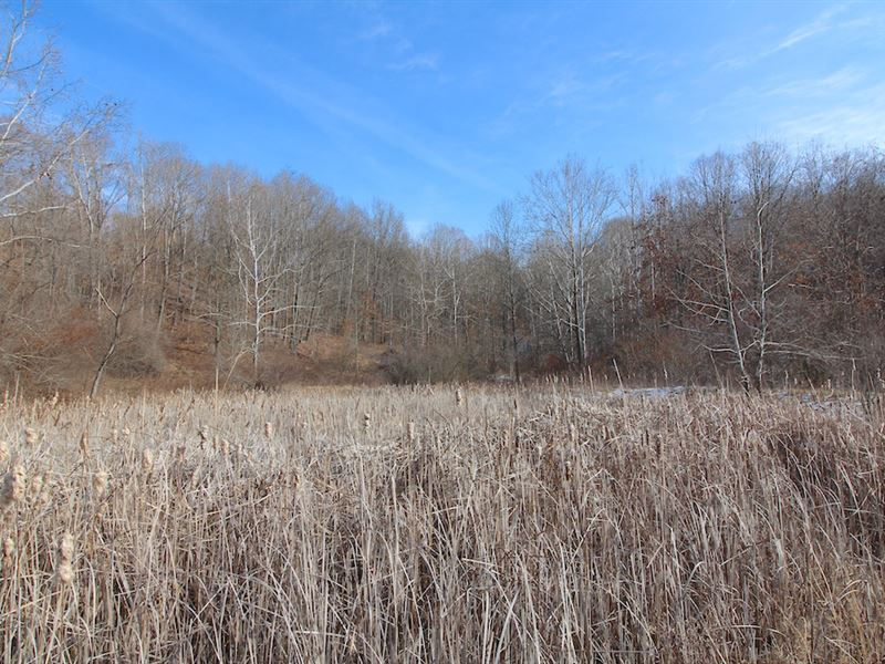 Ashton Hill Rd, 76 Acres : Dexter City : Noble County : Ohio