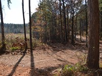 Great Hunting Tract With Timber : Chattahoochee : Gadsden County : Florida