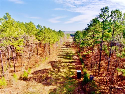 51 Acre Timber/Recreational/Develop : Frierson : De Soto Parish : Louisiana