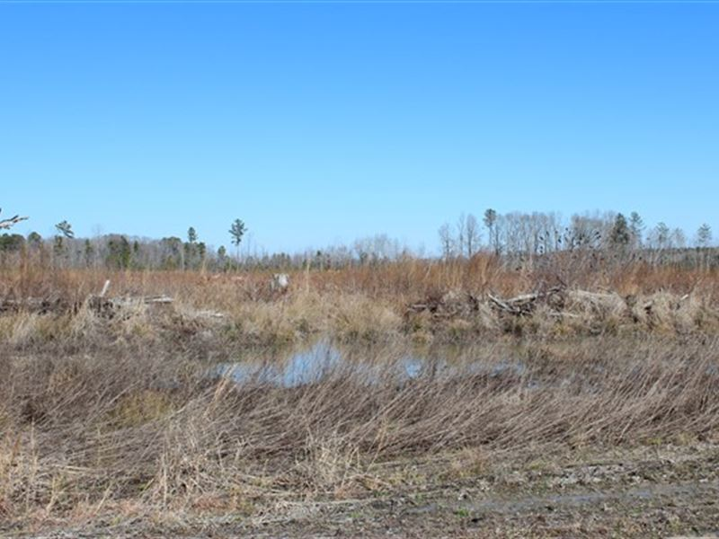 52.5 Acres-Chesterfield County, Sc : Society Hill : Chesterfield County : South Carolina