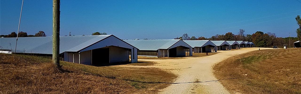 8 House Broiler Poultry Farm : Hackleburg : Marion County : Alabama