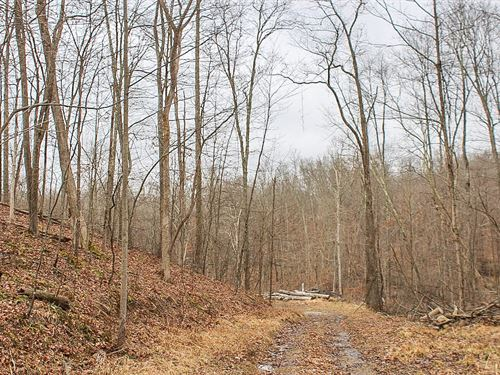 Wintergreen Rd - 12 Acres : Senecaville : Guernsey County : Ohio