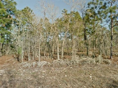 Putnam County, Fl $20,000 Neg : Interlachen : Putnam County : Florida