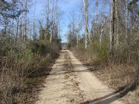 356 +/- Acres : Runnelstown : Perry County : Mississippi