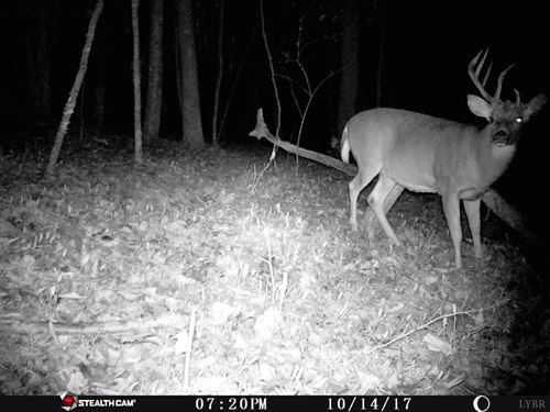 Just In Time For Hunting Season : Big Island : Bedford County : Virginia