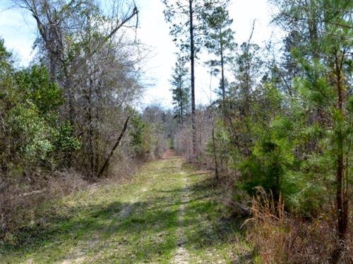 Little Rocky Creek : Hwy 338 : Laurens County : Georgia