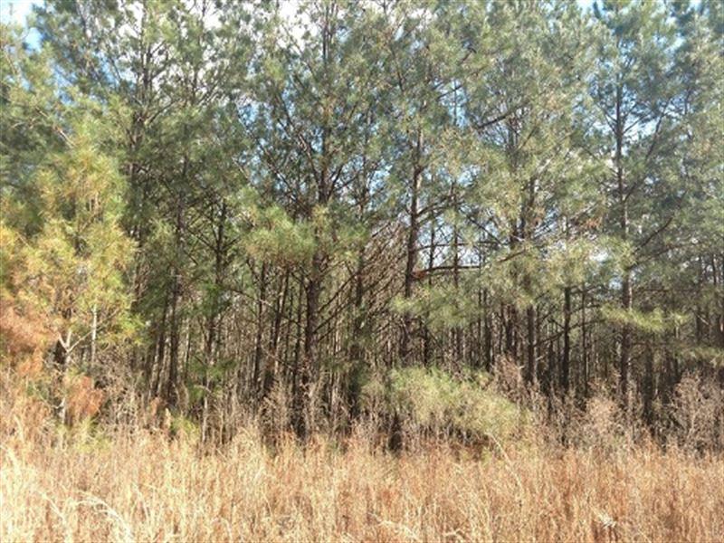 37.5 Ac Hunting Land W/ Homesite : Troy : Pike County : Alabama