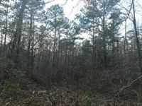 81.7 Acres Hunting Land In Pike Co : Banks : Pike County : Alabama