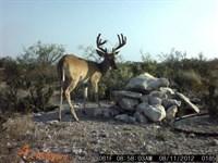 Hunting Ranch : Dryden : Terrell County : Texas