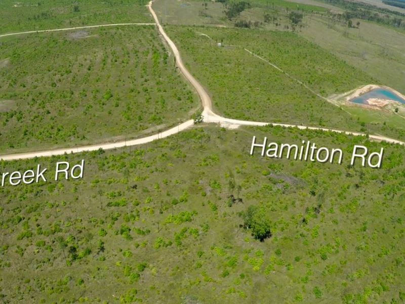 283 Acres Hamilton Road : Groveton : Trinity County : Texas