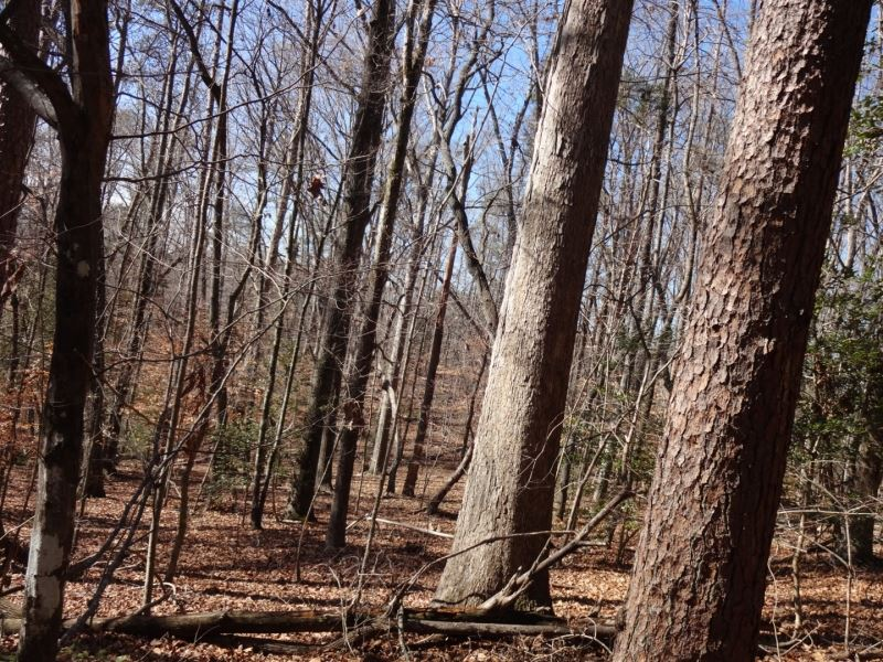 60.80 Acres Only 7 Miles From : Greenville : Greenville County : South Carolina