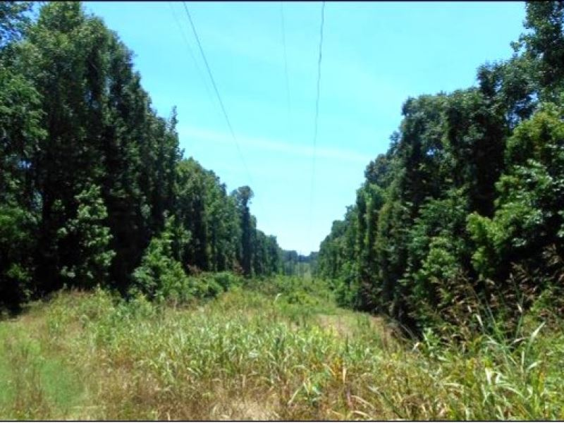 250 Acres In Yazoo County : Yazoo City : Yazoo County : Mississippi