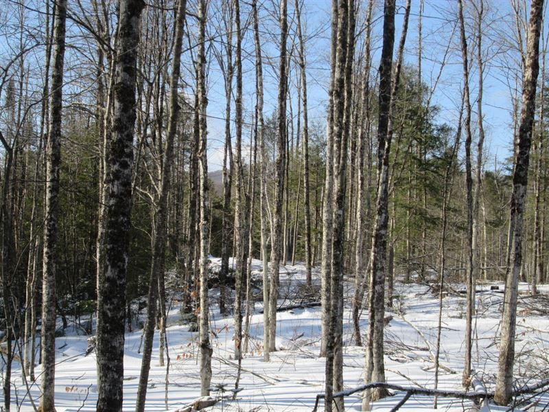 Dunkley Road Forest : Johnsburg : Warren County : New York