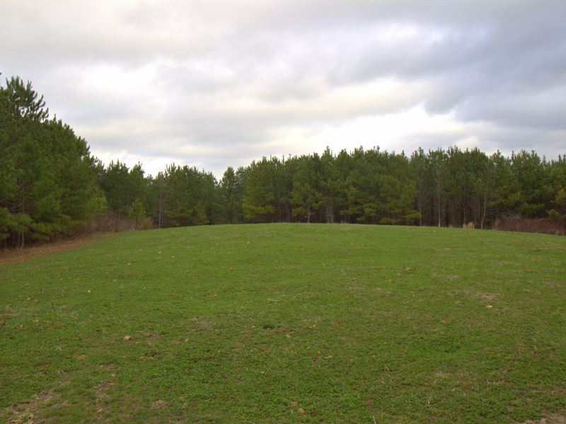 244 Acre Recreational Property : Summertown : Lewis County : Tennessee