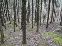 9.63Ac With Lake & Mtn Views : Granville : Jackson County : Tennessee