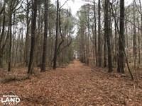 Mercer Mill Hunting Land With Timbe : Clarkton : Bladen County : North Carolina