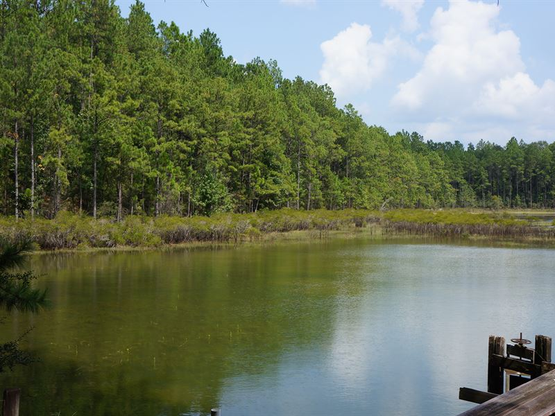932 Acres, Timber Investment Opp : Ponce De Leon : Holmes County : Florida