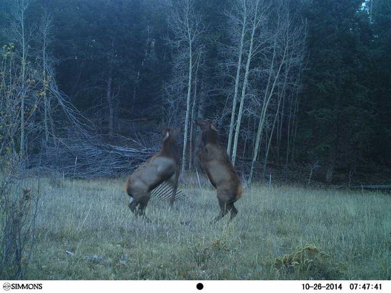 Dueling Elk Ranch South : Guffey : Park County : Colorado