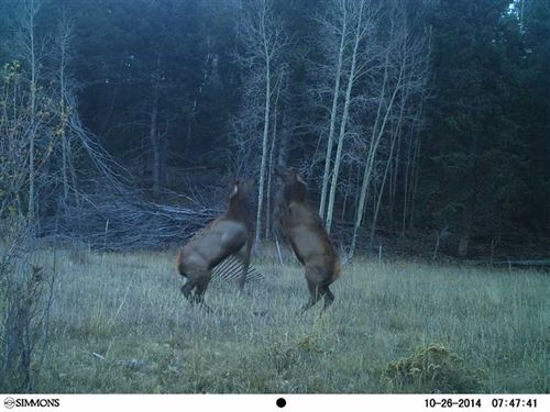Dueling Elk Ranch South : Guffey : Park County : Colorado