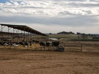 Dairy Farm - Income Producing Lease : Dublin : Erath County : Texas