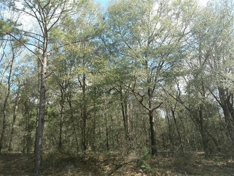 36 Wooded Acres In Dale Co : Ozark : Dale County : Alabama