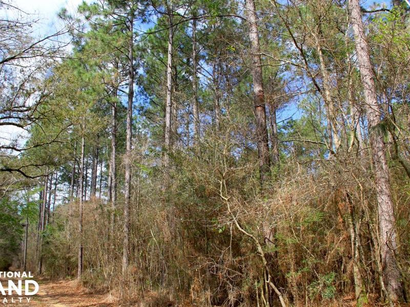 The Belforest Corn Branch Tract : Belforest : Baldwin County : Alabama