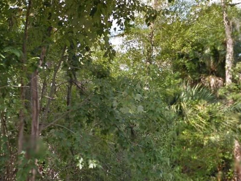 Collier County, Fl $25,000 Neg : Naples : Collier County : Florida