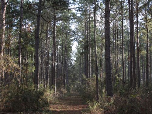 Big Timber Tract : Norman Park : Colquitt County : Georgia