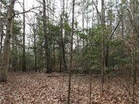 Timbered Rolling Hills 33.5 Acres : Bumpass : Louisa County : Virginia