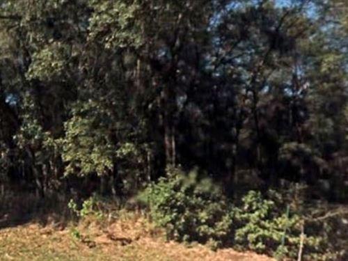 Marion County, Fl $35,000 Neg : Dunnellon : Marion County : Florida