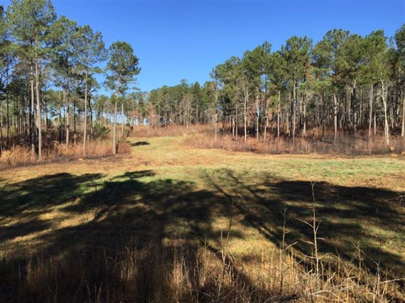 Pines, Fields And Great Hunting : Pine Mountain Valley : Harris County : Georgia